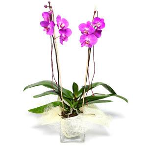 Konya hediye sevgilime hediye çiçek  Cam yada mika vazo içerisinde  1 kök orkide