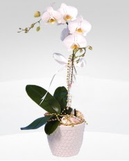 1 dallı orkide saksı çiçeği  Konya çiçek siparişi vermek