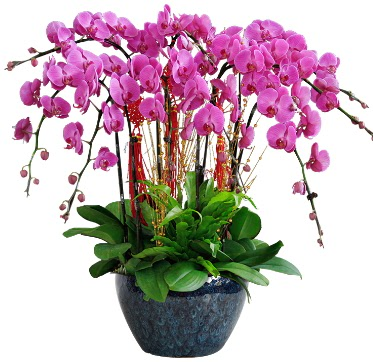 9 dallı mor orkide  Konya çiçek satışı