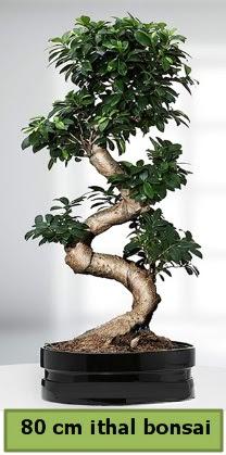 80 cm özel saksıda bonsai bitkisi  Konya anneler günü çiçek yolla