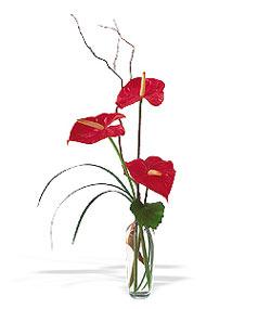 Konya güvenli kaliteli hızlı çiçek  cam yada mika Vazoda 3 adet  antoryum