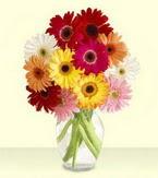 Konya online çiçek gönderme sipariş  cam yada mika vazoda 15 özel gerbera