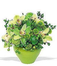 cam yada mika vazoda 5 adet orkide   Konya çiçek siparişi vermek