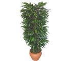 Konya güvenli kaliteli hızlı çiçek  Özel Mango 1,75 cm yüksekliginde