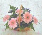 gerbera çiçeklerinde sepet   Konya uluslararası çiçek gönderme