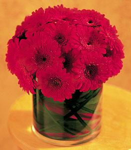 Konya çiçek servisi , çiçekçi adresleri  23 adet gerbera çiçegi sade ve sik cam içerisinde