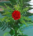 1 adet kirmizi gül buketi   Konya İnternetten çiçek siparişi