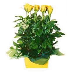 11 adet sari gül aranjmani  Konya çiçek siparişi vermek