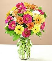 Konya hediye çiçek yolla  17 adet karisik gerbera