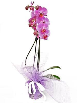 Konya çiçek , çiçekçi , çiçekçilik  Kaliteli ithal saksida orkide