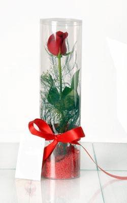 Konya uluslararası çiçek gönderme  Silindir vazoda tek kirmizi gül
