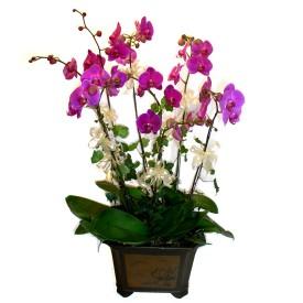 Konya çiçek yolla  4 adet orkide çiçegi