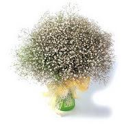 Konya çiçek siparişi sitesi  cam yada mika vazo içerisinde cipsofilya demeti