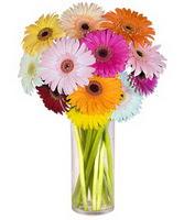 Konya çiçek yolla , çiçek gönder , çiçekçi   Farkli renklerde 15 adet gerbera çiçegi