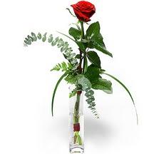 Konya çiçek satışı  Sana deger veriyorum bir adet gül cam yada mika vazoda