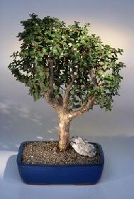 Konya 14 şubat sevgililer günü çiçek  ithal bonsai saksi çiçegi  Konya online çiçekçi , çiçek siparişi