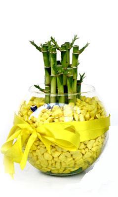cam fanus içerisinde bambo  Konya yurtiçi ve yurtdışı çiçek siparişi