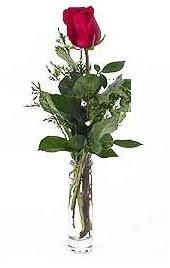 Vazo içerisinde 1 adet kirmizi gül  Konya çiçek gönderme