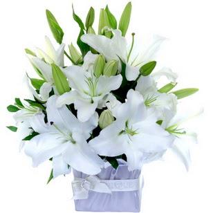 Konya uluslararası çiçek gönderme  2 dal cazablanca vazo çiçeği