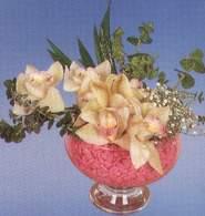 Konya çiçek siparişi sitesi  Dal orkide kalite bir hediye