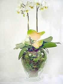 Konya hediye sevgilime hediye çiçek  Cam yada mika vazoda özel orkideler