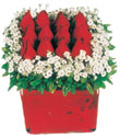 Konya 14 şubat sevgililer günü çiçek  Kare cam yada mika içinde kirmizi güller - anneler günü seçimi özel çiçek