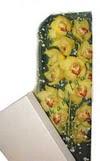Konya 14 şubat sevgililer günü çiçek  Kutu içerisine dal cymbidium orkide