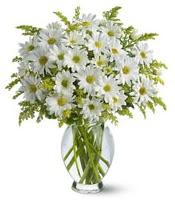 Vazo içerisinde beyaz krizantem çiçekleri  Konya kaliteli taze ve ucuz çiçekler