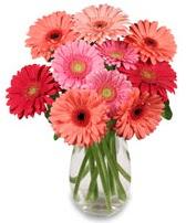 vazo içerisinde 13 adet gerbera çiçeği  Konya güvenli kaliteli hızlı çiçek