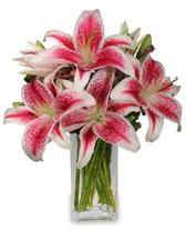 Vazo içerisinde 5 dal kazablanka çiçeği  Konya çiçek gönderme