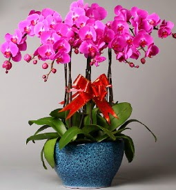 7 dallı mor orkide  Konya hediye çiçek yolla