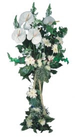 Konya çiçek siparişi sitesi  antoryumlarin büyüsü özel