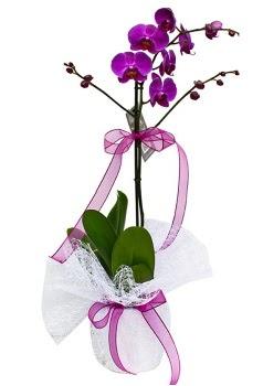 Tek dallı mor orkide  Konya anneler günü çiçek yolla