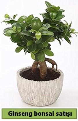 Ginseng bonsai japon ağacı satışı  Konya anneler günü çiçek yolla
