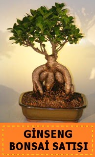 Ginseng bonsai satışı japon ağacı  Konya çiçek yolla