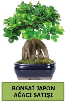 Bonsai japon ağacı satışı  Konya hediye sevgilime hediye çiçek