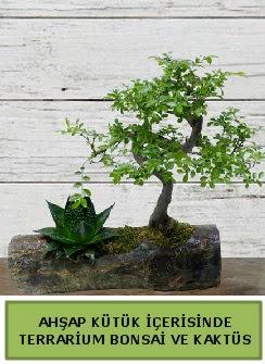 Ahşap kütük bonsai kaktüs teraryum  Konya çiçek yolla , çiçek gönder , çiçekçi