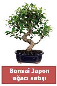Japon ağacı bonsai satışı  Konya güvenli kaliteli hızlı çiçek