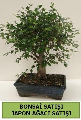 Minyatür bonsai japon ağacı satışı  Konya cicekciler , cicek siparisi
