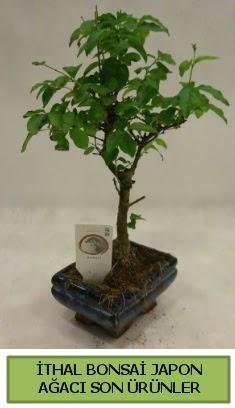 İthal bonsai japon ağacı bitkisi  Konya ucuz çiçek gönder