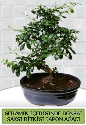 Seramik vazoda bonsai japon ağacı bitkisi  Konya güvenli kaliteli hızlı çiçek
