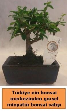 Japon ağacı bonsai satışı ithal görsel  Konya uluslararası çiçek gönderme