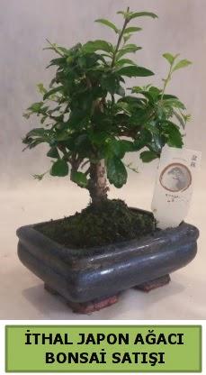 İthal japon ağacı bonsai bitkisi satışı  Konya anneler günü çiçek yolla