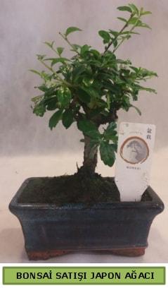 Minyatür bonsai ağacı satışı  Konya 14 şubat sevgililer günü çiçek