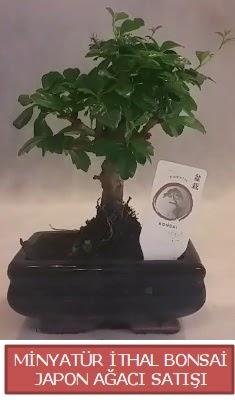 Küçük görsel bonsai japon ağacı bitkisi  Konya çiçek online çiçek siparişi