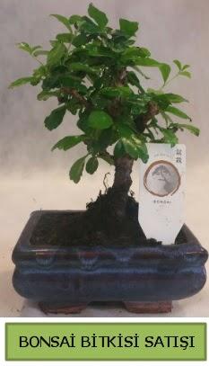 Bonsai ithal görsel minyatür japon ağacı  Konya çiçek servisi , çiçekçi adresleri