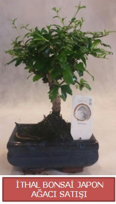İthal küçük boy minyatür bonsai ağaç bitkisi  Konya anneler günü çiçek yolla
