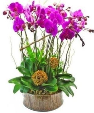 Ahşap kütükte lila mor orkide 8 li  Konya yurtiçi ve yurtdışı çiçek siparişi