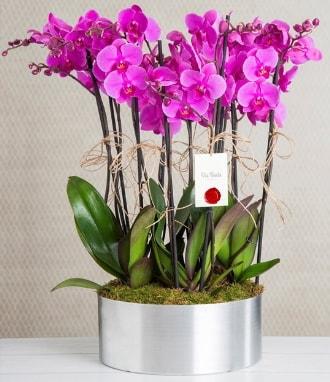 11 dallı mor orkide metal vazoda  Konya cicekciler , cicek siparisi