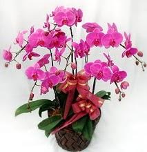 Sepet içerisinde 5 dallı lila orkide  Konya çiçek servisi , çiçekçi adresleri